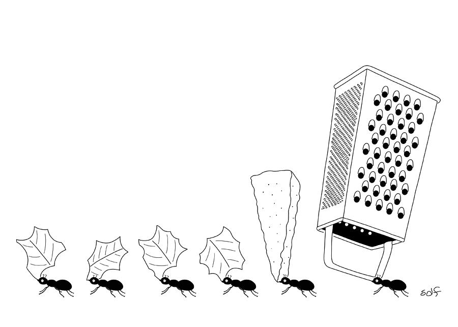 Ants with Cheese Grater Drawing by Seth Fleishman