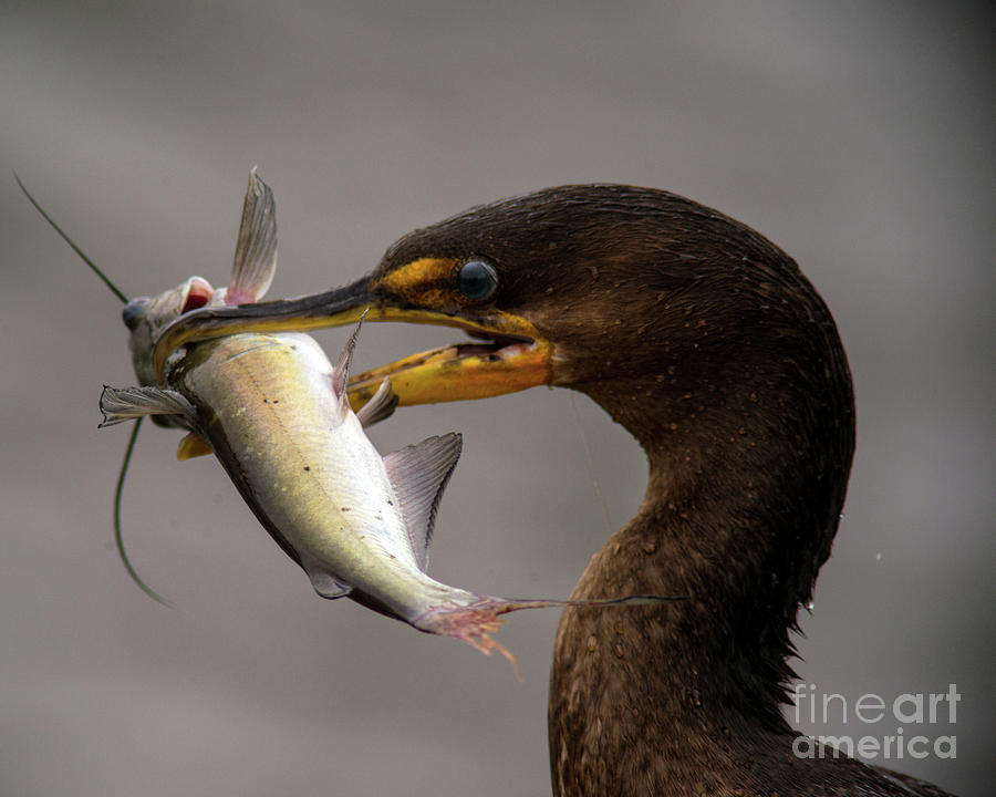 Anyone for Catfish? by Jane Axman