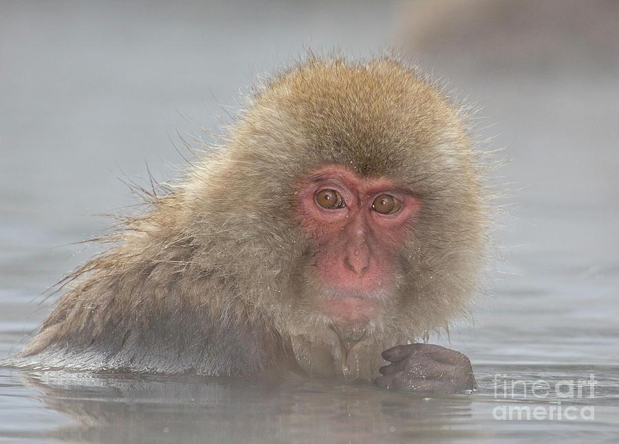 Monkeys Photograph - Anyone Looking by Leigh Lofgren