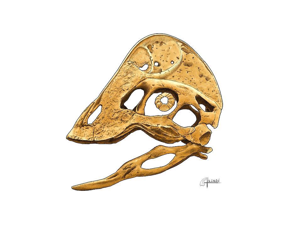 Anzu wyliei Skull by Rick Adleman