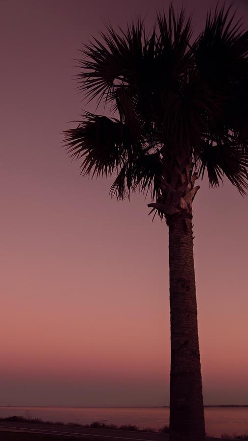 Apalachicola Palm by Maria Robinson