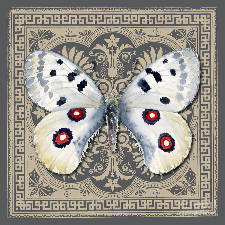 Apollo Butterfly Design Painting