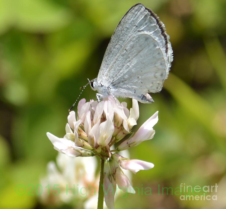 Blue Photograph - Appalachian Azure by Randy Bodkins