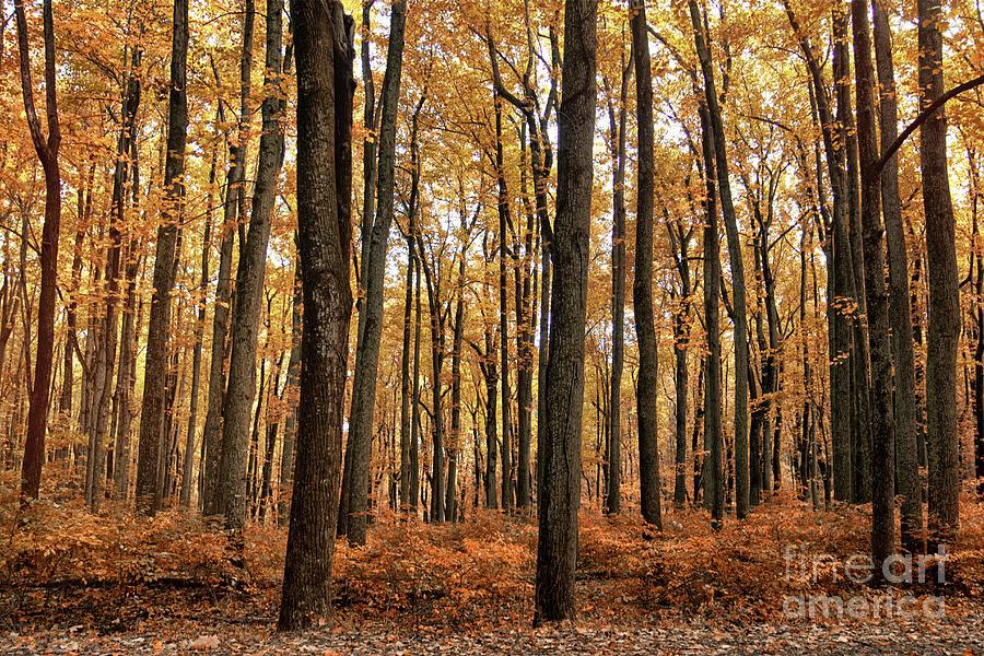 Appalachian Fall Photograph