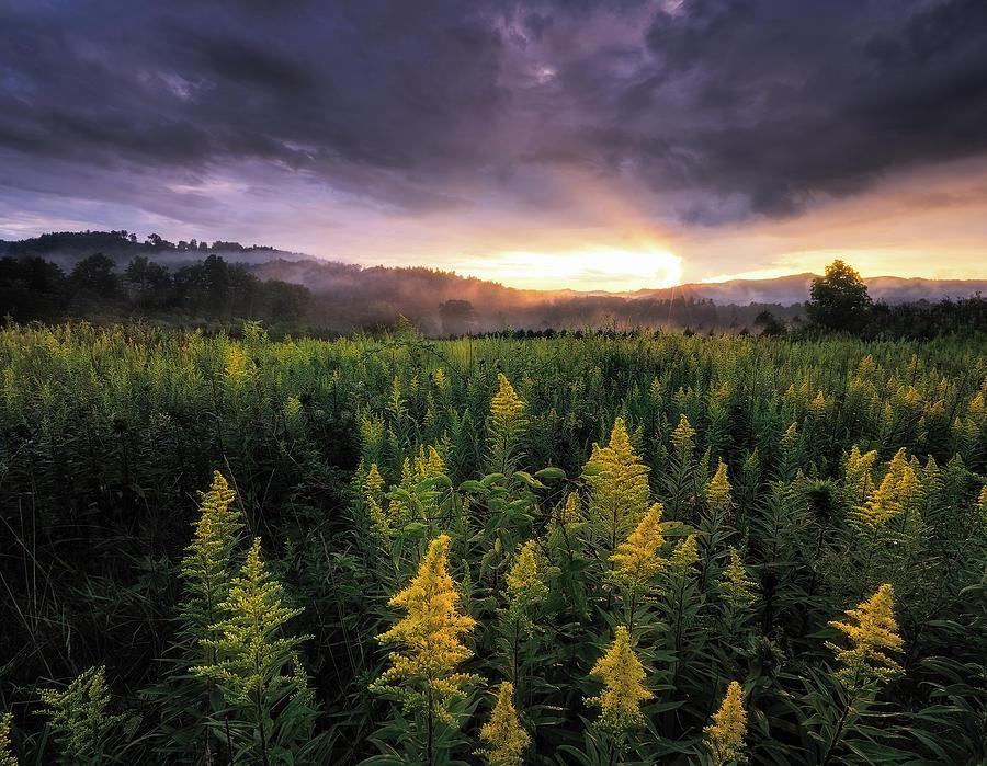 Sunset Photograph - Appalachian Mountains - Golden Rods And Golden Sunsets by Jason Penland