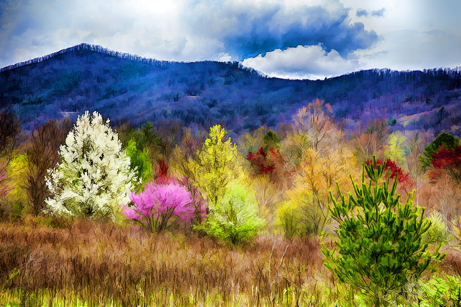 Appalachian Spring In The Holler Photograph