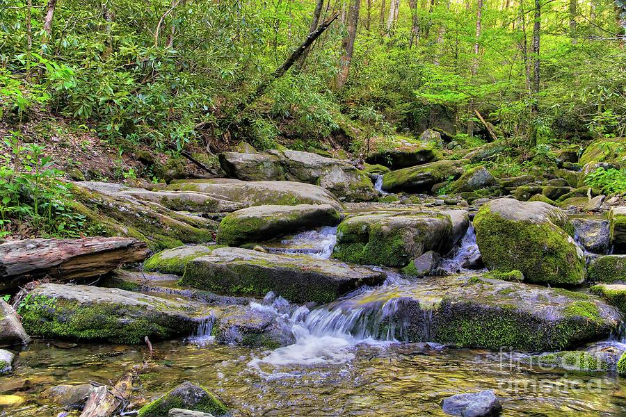 Nature Photograph - Appalachian Stream by James Foshee