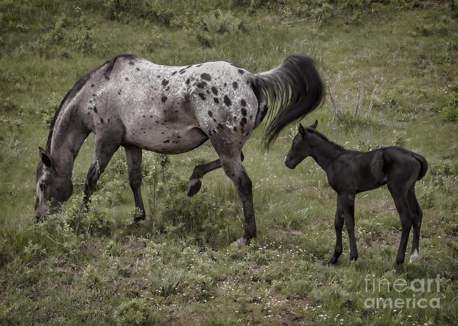 Nature Photograph - Appaloosa And Baby by Janice Pariza