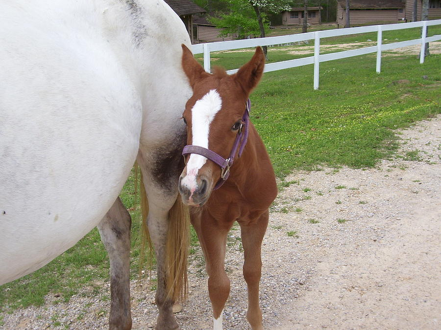 Horse Photograph - Appaloosa Filly by Kristen Hurley