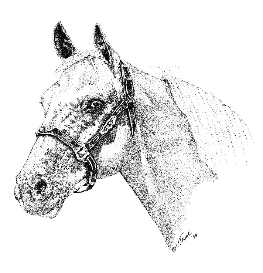 Horse Drawing - Appaloosa by Lawrence Tripoli