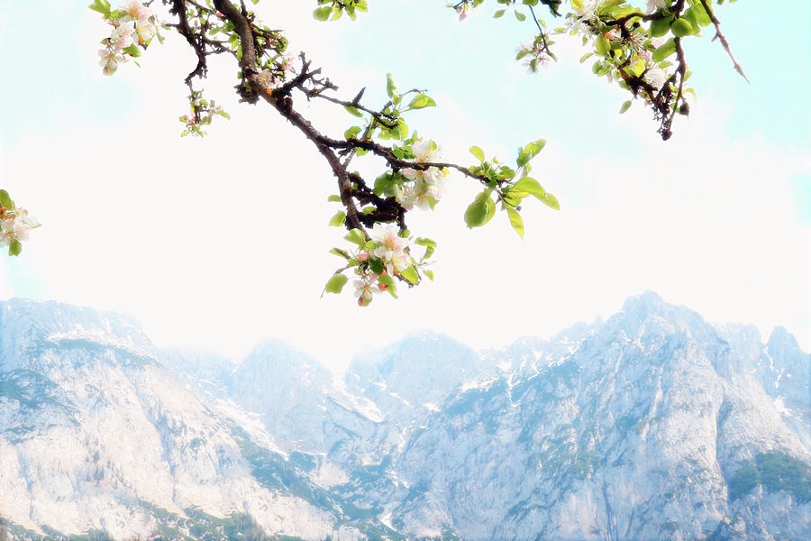 Mountains Landscape Photograph - Apple Blossoms And Mountains by Brooke T Ryan