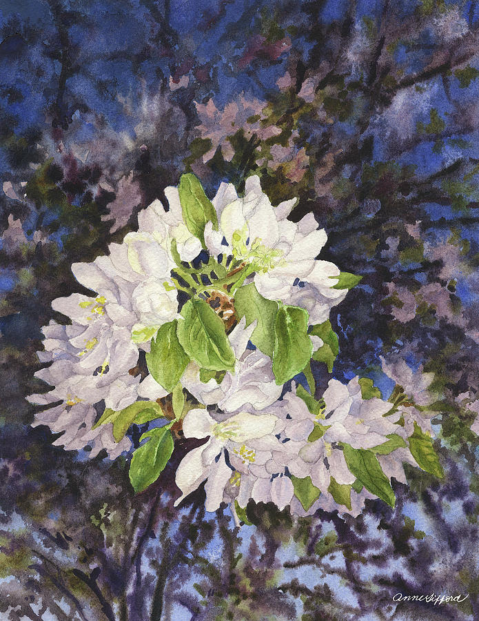 Apple Blossoms At Dusk Painting by Anne Gifford