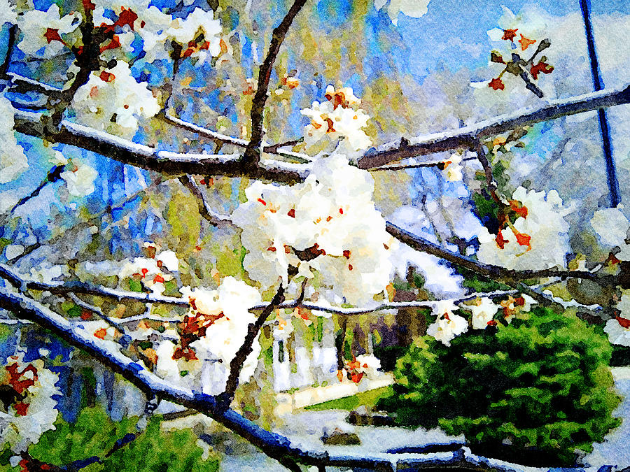 Apple Blossoms by Donald S Hall