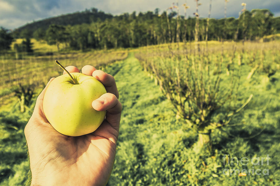 Apple Grower In Cradoc Tasmania Photograph by Jorgo Photography ...