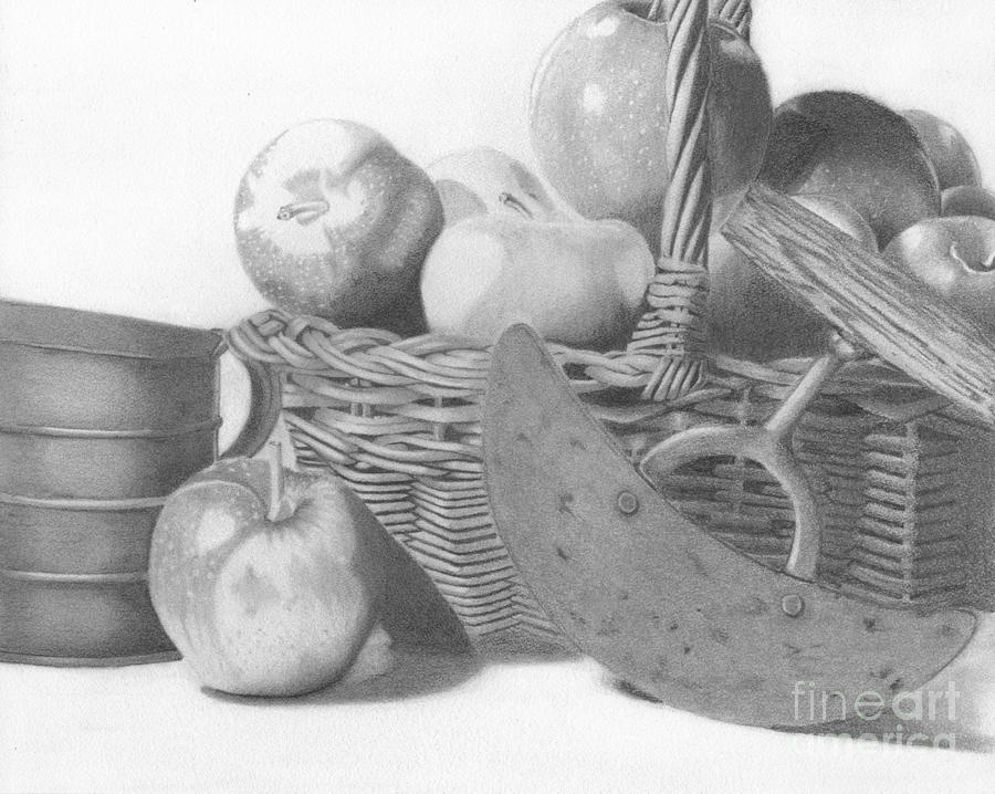 Apple Drawing - Apple Orchard by Dave Nevue