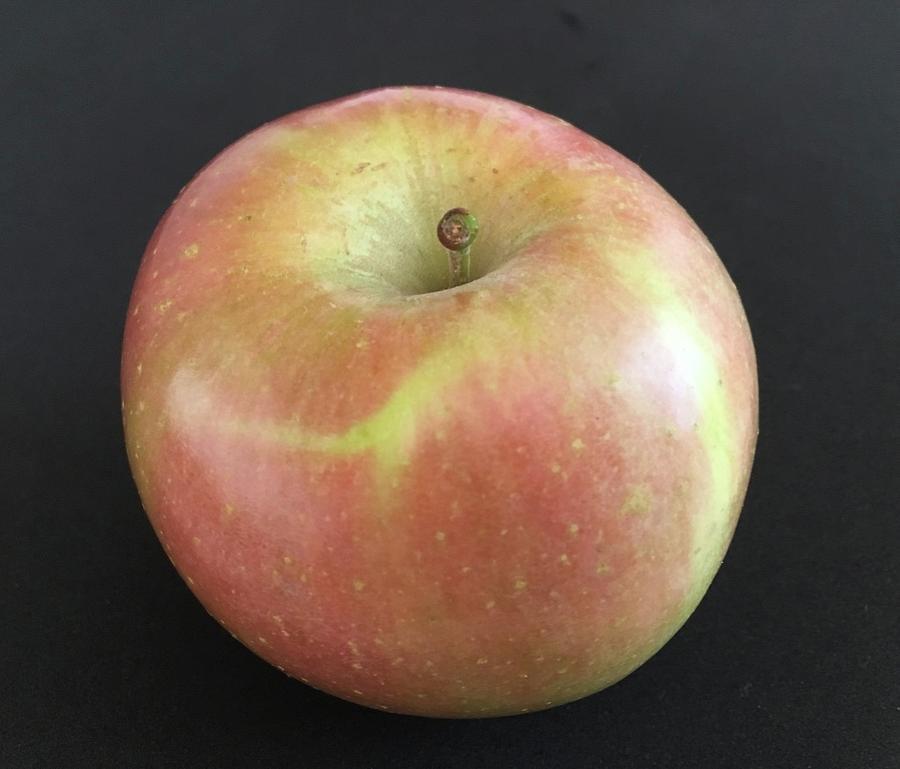 Apple by Roger Cummiskey