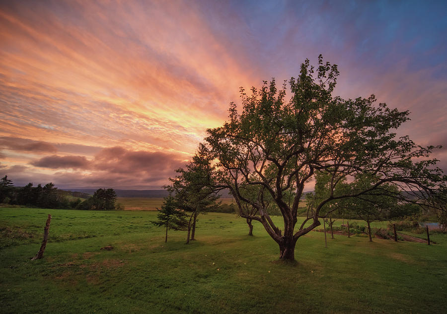 Apple Tree in Evening by Tracy Munson