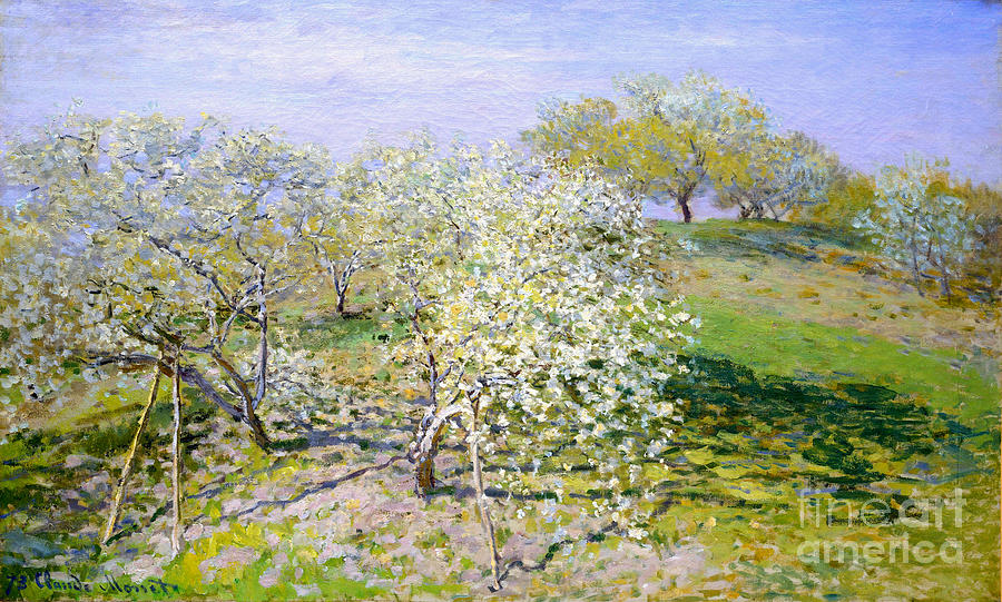 Apple Trees In Bloom Painting - Apple Trees In Bloom  by Celestial Images
