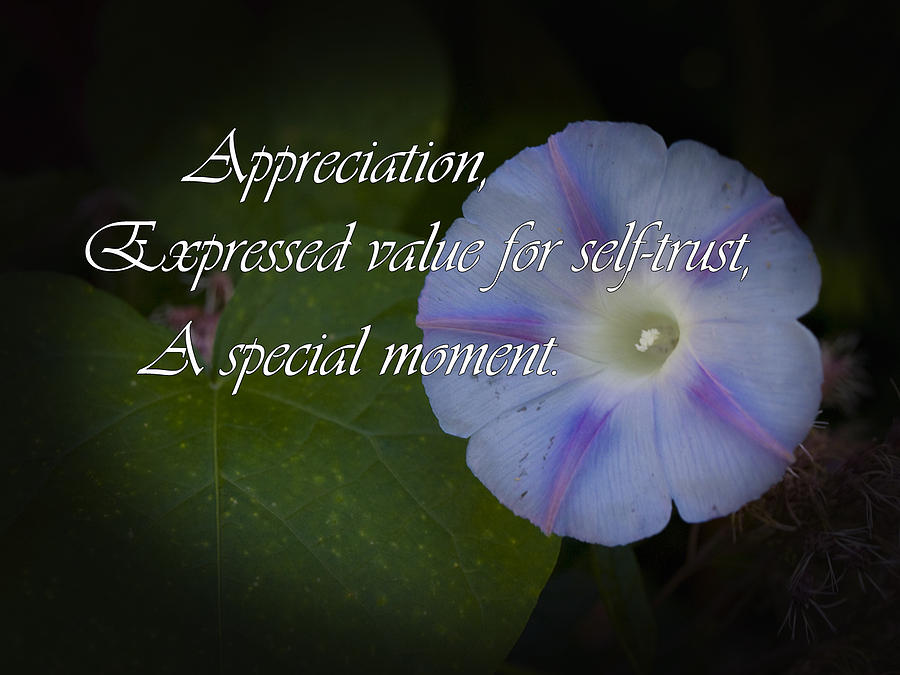 Greeting Cards Photograph - Appreciation by Elliptical Art
