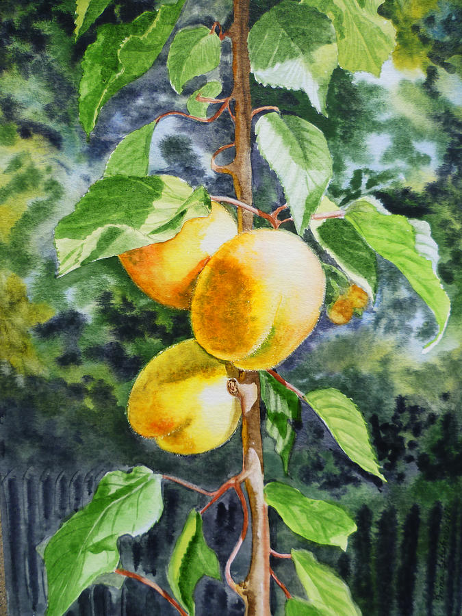Apricot Painting - Apricots In The Garden by Irina Sztukowski