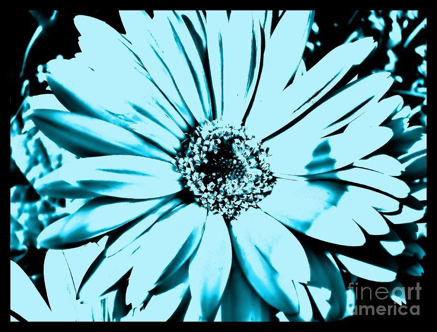 Photo Photograph - Aqua Daisy Blue by Marsha Heiken