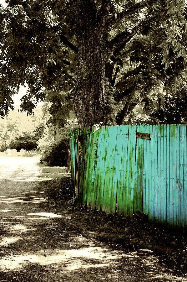 Tree Photograph - Aqua Fence by Jill Tennison