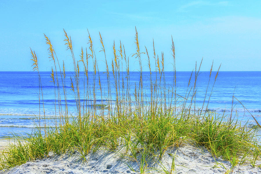 The Face Of God Photograph - Aqua Watered Sea Oats by Paula Porterfield-Izzo
