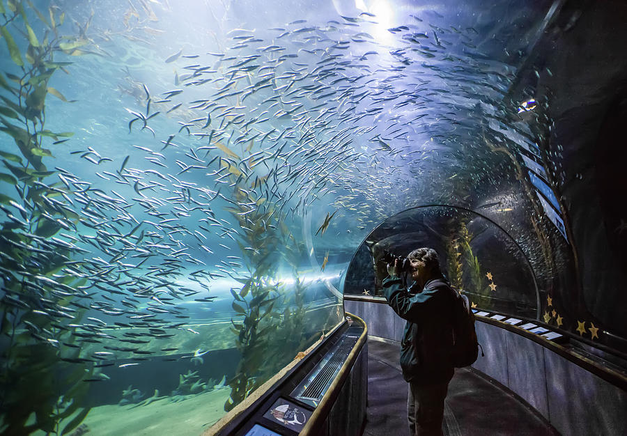 Aquarium Of The Bay Underwater Tunnel San Francisco Ca