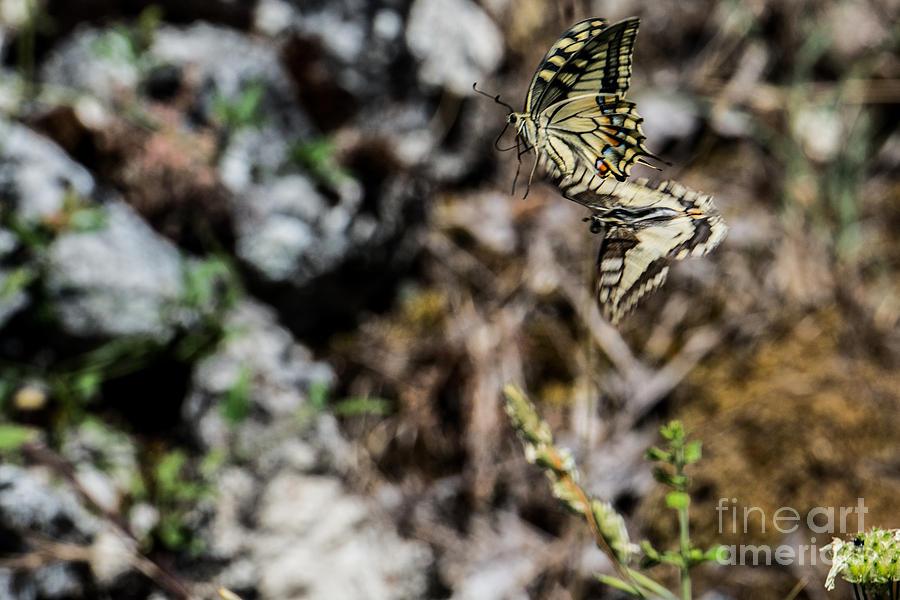Roccasecca Photograph - Aquinos Butterflies by Joseph Yarbrough