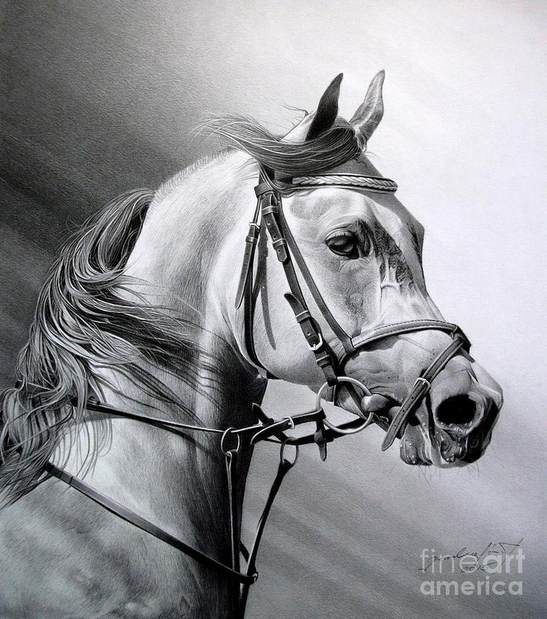 Horse Drawing - Arabian Beauty by Miro Gradinscak