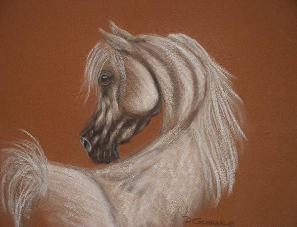 Horse Painting - Arabian by Diana Cochran