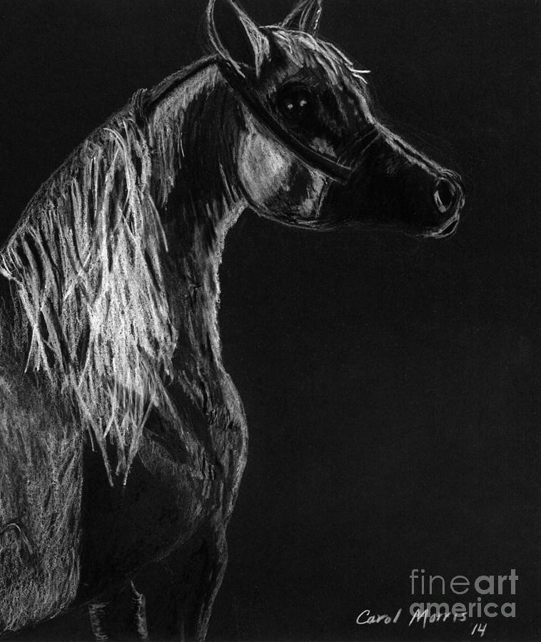 Arabian Horse by Carol Morris