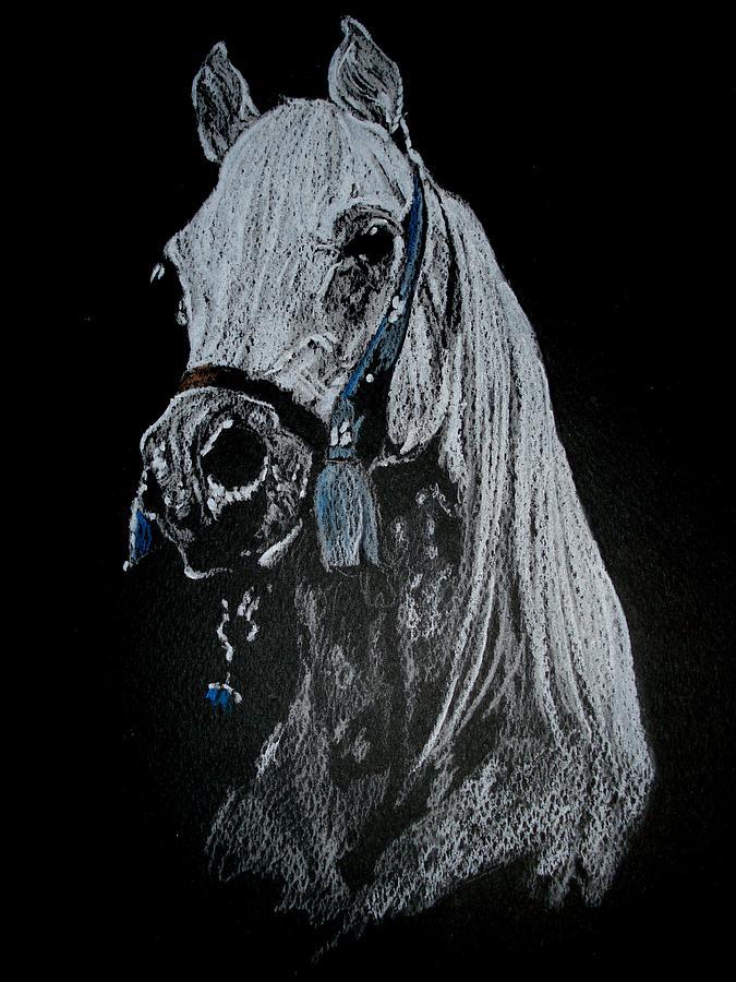 Horse Pastel - arabian horse I by Desimir Rodic