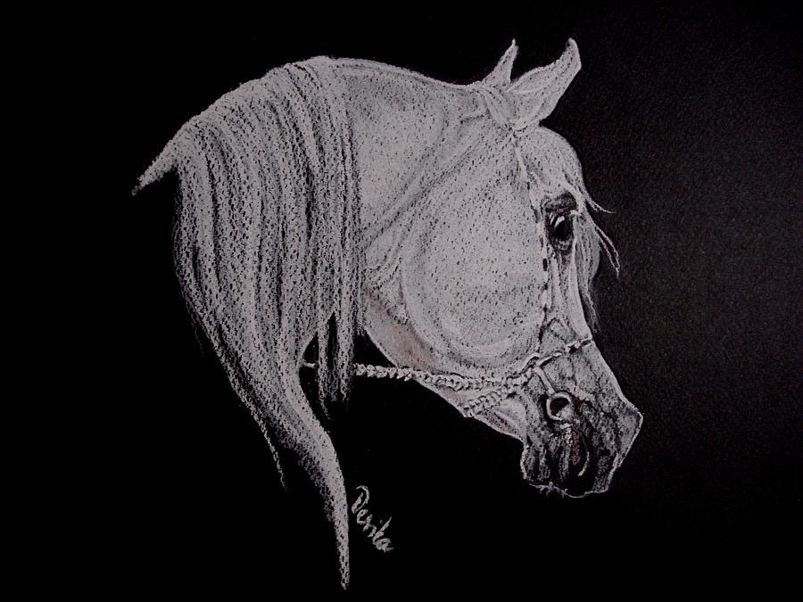 Horse Pastel - arabian horse XI by Desimir Rodic