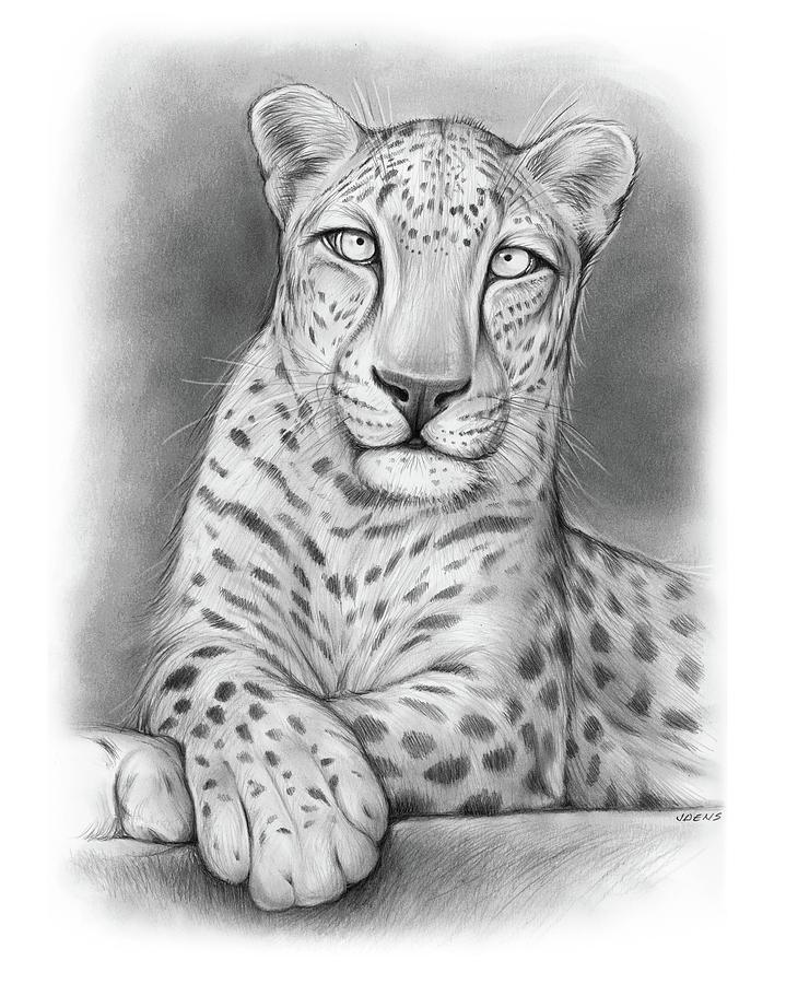 Arabian Leopard Drawing - Arabian Leopard by Greg Joens