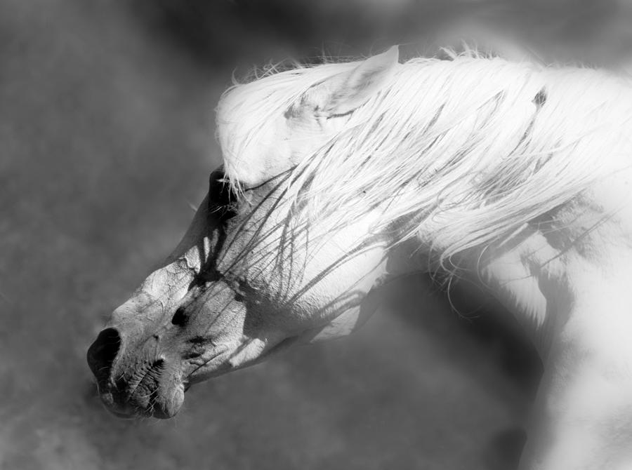Arabian Horses Photograph - Arabian War Horse by ELA-EquusArt
