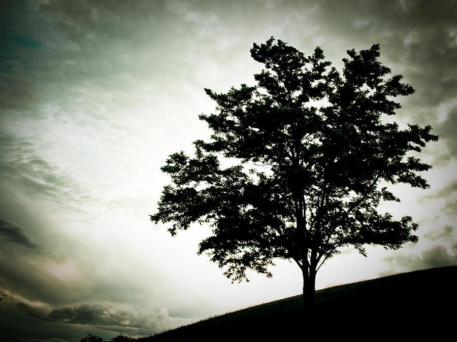Tree Photograph - Arbol by Felix M Cobos