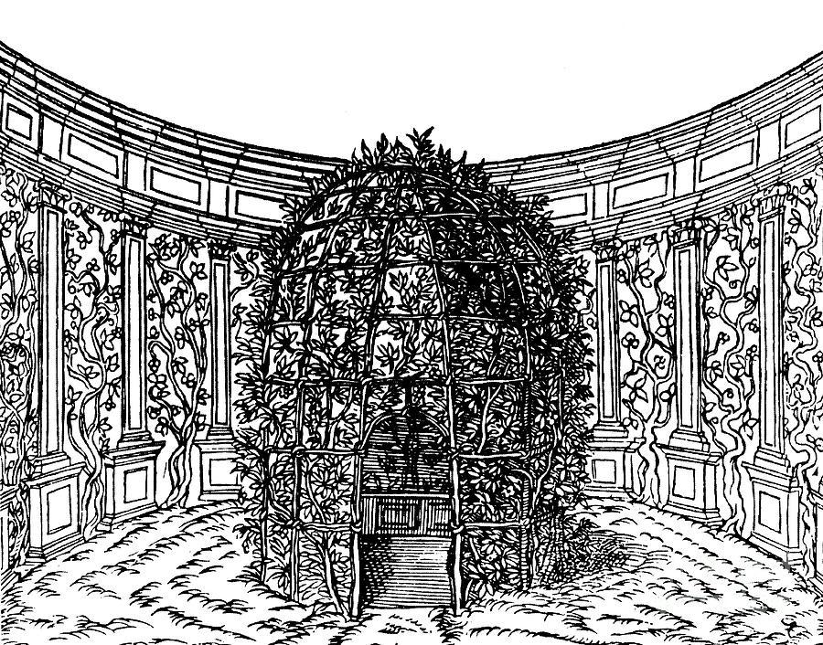 Arbour Drawing - Arbor by Italian School