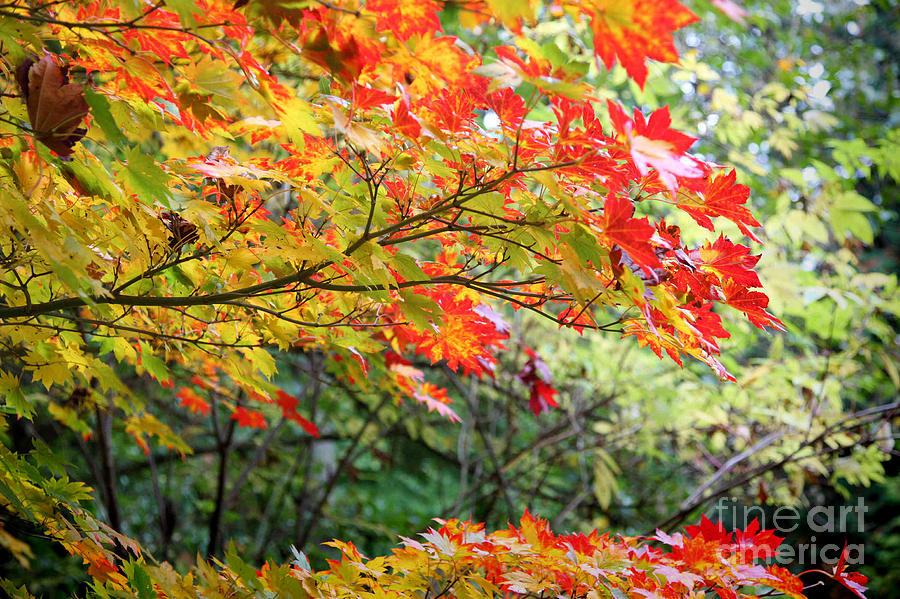 Autumn Photograph - Arboretum Autumn Leaves by Peter Simmons