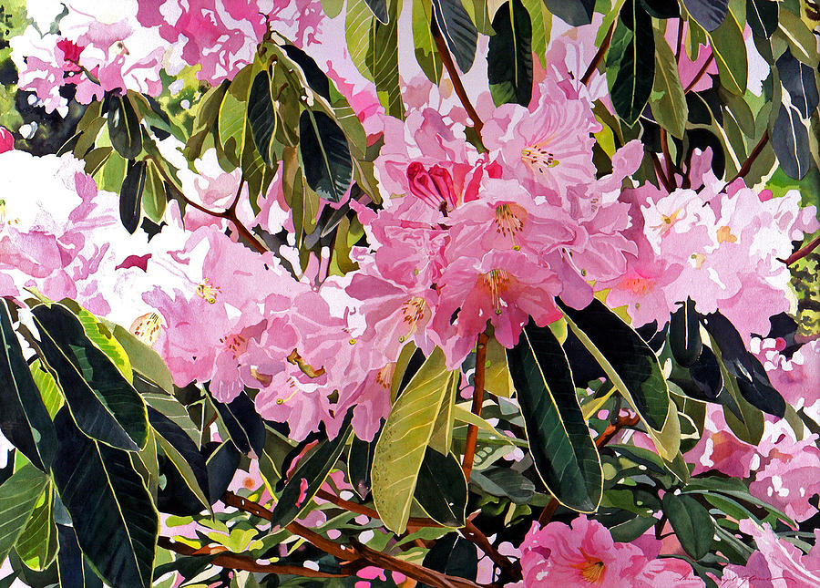 Flowers Painting - Arboretum Rhododendrons by David Lloyd Glover