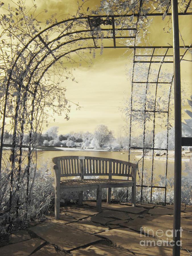 Arboretum Trellis Bench by Crystal Nederman