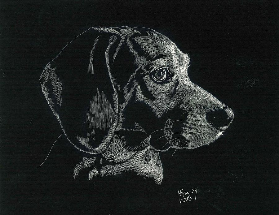 Scratchboard Drawing - Archie by Norma Rowley