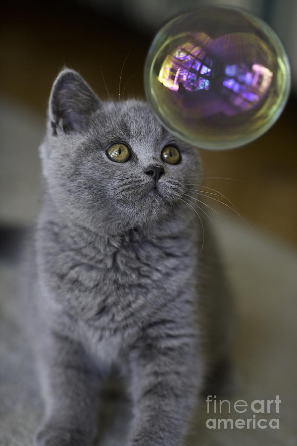 Cat Photograph - Archie With Bubble by Sheila Smart Fine Art Photography
