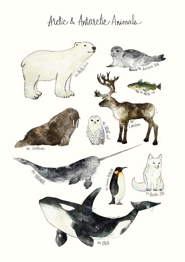 Chart Painting - Arctic And Antarctic Animals by Amy Hamilton