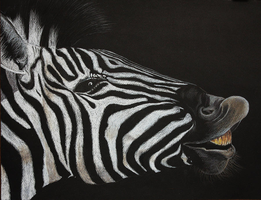 Zebra Painting - Are My Teeth Clean Yet by Don MacCarthy