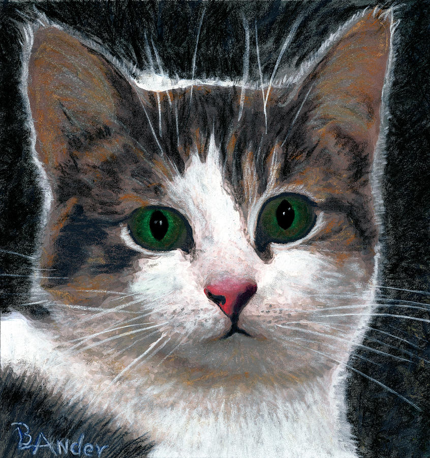 American Shorthair Drawing - Are you talking to me by Brent Ander