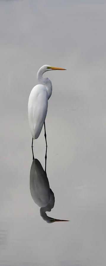 Egret Photograph - Argent Mirror #2 by Paul Rebmann