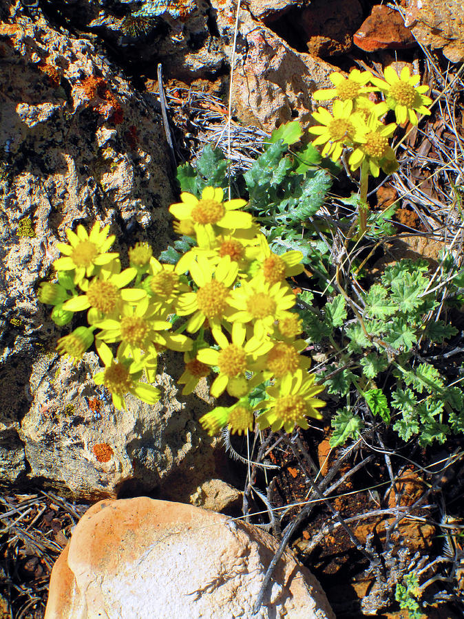 Arizona Desert Flowers Photograph By Ilia