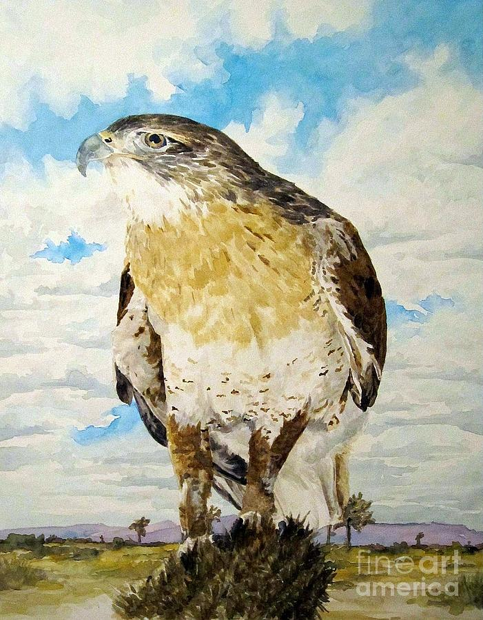 Animal Painting - Arizona Hawk by Theresa Higby