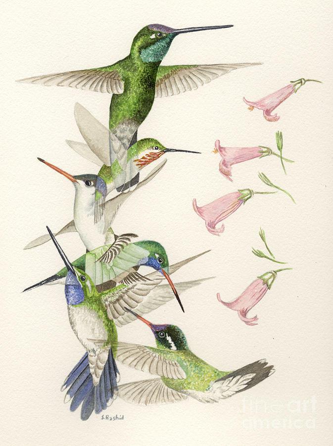 Hummingbirds Painting - Arizona Hummingbirds by Scott Rashid